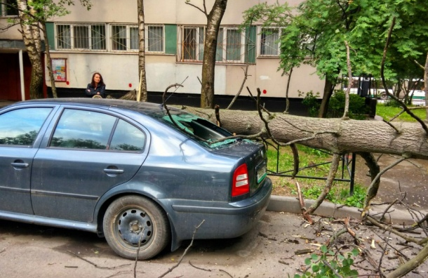 Дерево рухнуло на припаркованные машины на улице Демьяна Бедного