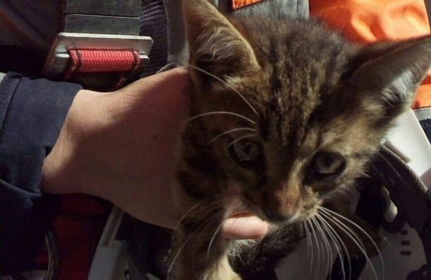 Сотрудники ЗСД спасали застрявшего в опоре котенка