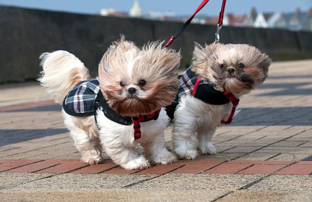 МЧС: в Петербурге сильный ветер и дождь
