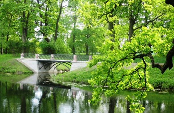 Царское Село двигается в парки
