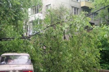 Ветер на улице Крыленко уронил дерево на провода
