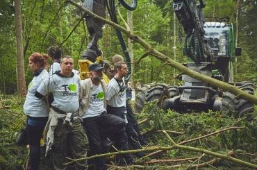 Greenpeace заблокировал вырубку Беловежской пущи