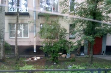 Труп около дома на Костюшко обнаружили местные жители