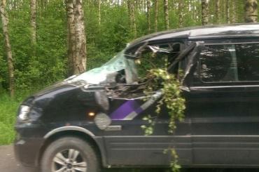 Дерево упало на двигавшуюся машину под Сестрорецком