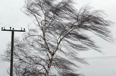 В понедельник петербуржцев встретят ветер и гроза