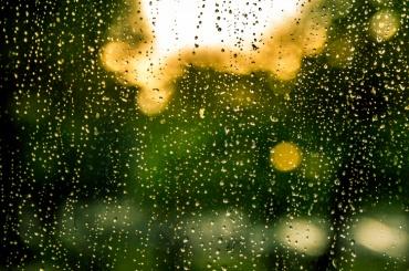 Выходные в Петербурге пройдут дождливо