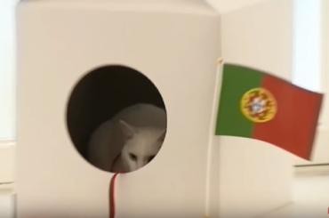 Глухой кот предсказал победу Португалии