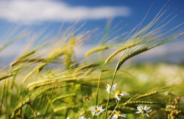 Ливни, грозы и сильный ветер ждут в Ленобласти