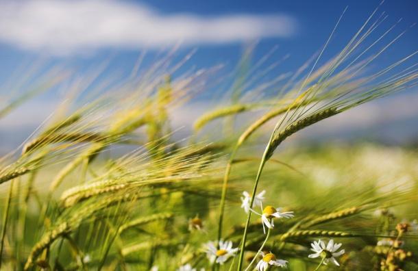 Ливни и грозы пройдут в Ленобласти в четверг и пятницу