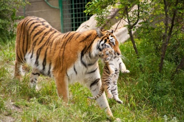 Через три года в Ленобласти может появиться сафари-парк