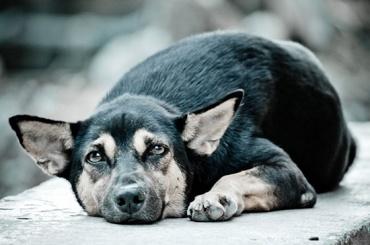 Дума неспешит рассматривать закон озащите животных