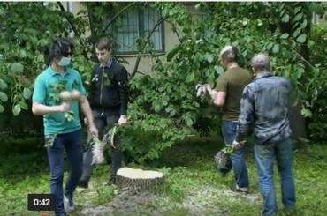 Петербургский журналист похоронил пенек