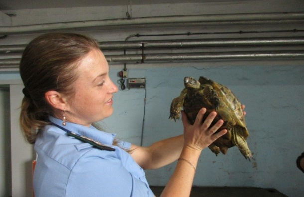 Правозащитники выпустят 36 петербургских черепах на волю в Краснодарском крае