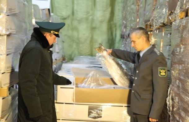 Норвежский лосось прикинулся белорусским и прибыл в Петербург