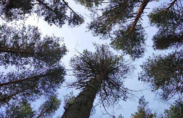 Как пойти в лес и остаться в живых