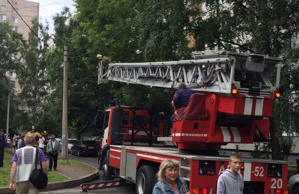 Спасатели сняли котенка с дерева на улице Партизана Германа