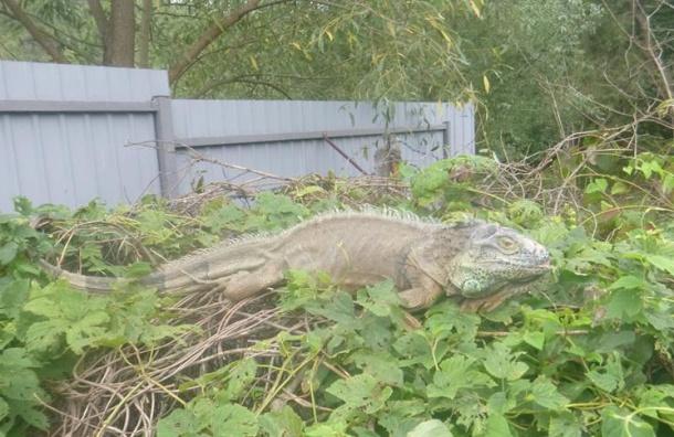 Жительницу Киева спасли от «динозавра», поедающего кабачки