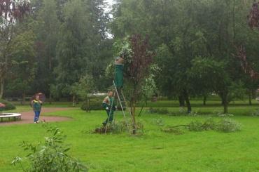 Волшебники «озеленили» парк при помощи гербария искотча