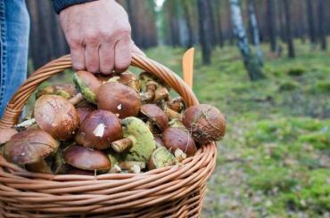 Три человека погибли в лесах Ленобласти этим летом