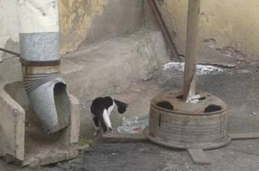 Зоозащитники заявили, что большая часть кошек Гостиного двора пропала