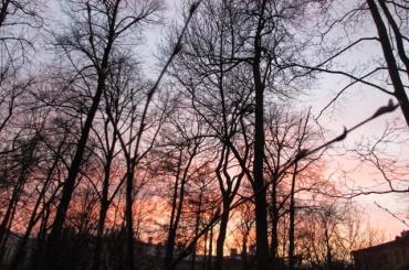 Грезы Фирса про вишневый сад сыграют в Шереметевском саду