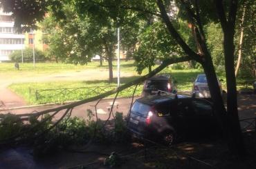 Дерево рухнуло на машины на проспекте Ударников