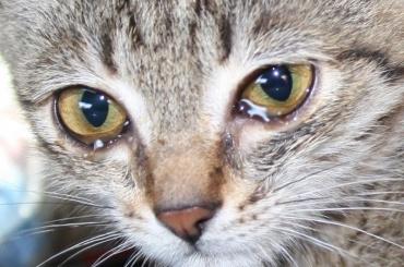 Петербургские коты могут остаться без корма из Лихтенштейна
