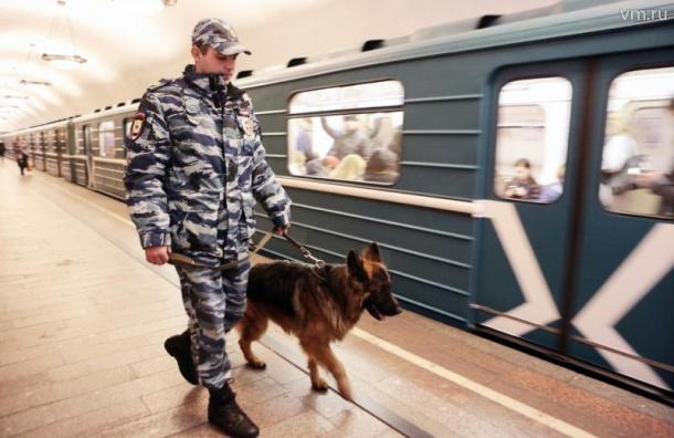 Петербургское метро ищет кинологов ссобаками за 700 тыс.  руб.