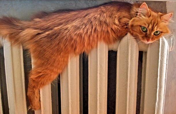 Тепло в петербургских квартирах появится через несколько дней