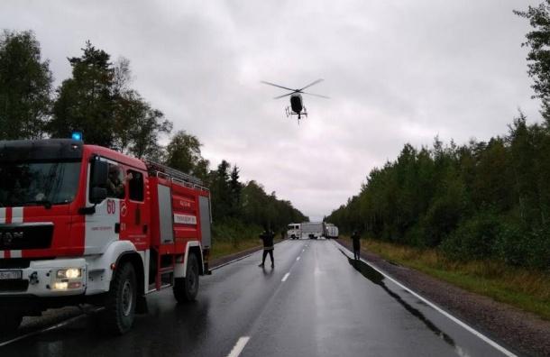 Спасатели нашли в лесу под Сестрорецком исчезнувших женщин