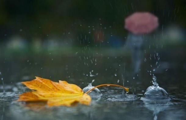 Выходные в Петербурге будут дождливыми