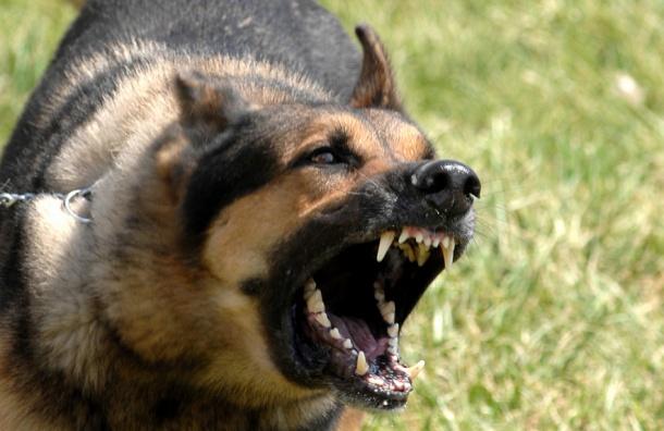 ВИркутской области собаки насмерть растерзали двухлетнего ребенка