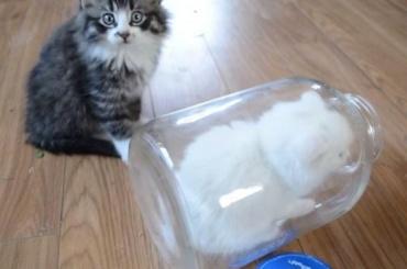 Кошки могут иметь жидкое состояние