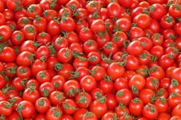 Россия может в плане эксперимента возобновить поставки помидоров из Турции