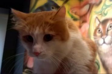 Пострадавшие в пожаре эрмитажные кошки нашли новых хозяев