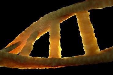 Ученые нашли эффективный способ замедлить старение