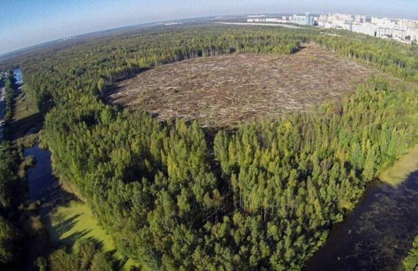 Петербуржцы обеспокоены вырубкой леса вПриморском районе