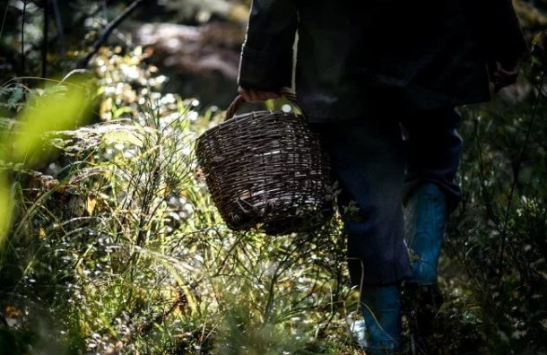 Грибник в Ленобласти провел в лесу 11 дней