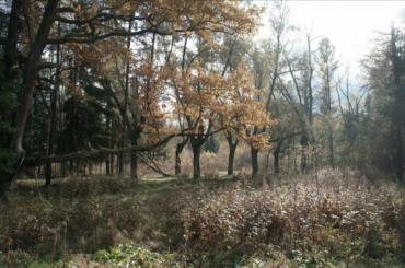 Баболовский парк продали позаниженной цене