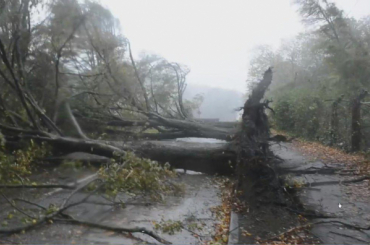 «Обессиленный» ураган «Офелия» доберется до Петербурга