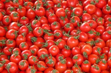 Турецкие помидоры вернутся в РФ зимой