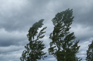 Очевидцы: дикий ветер в Петербурге гнет деревья
