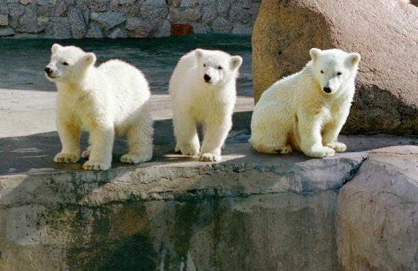 Снежинка поселится вЛенинградском зоопарке