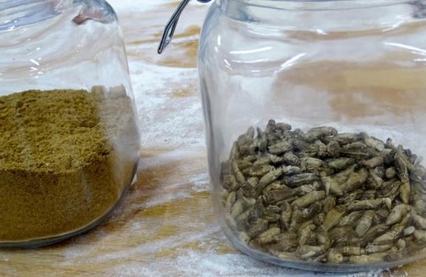 Хлеб изнасекомых начнут продавать вФинляндии