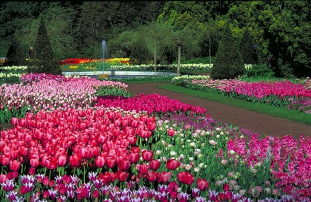 Петербург кЧМ украсят цветочными арками икаскадами с8 млн цветов