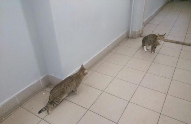 Двух котов вмешке выбросили сбалкона напроспекте Славы