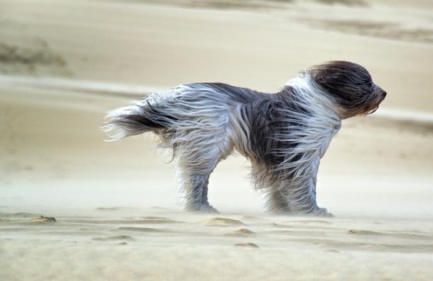 МЧС: Петербург иЛенобласть ожидает рискованное усиление ветра, гололедица
