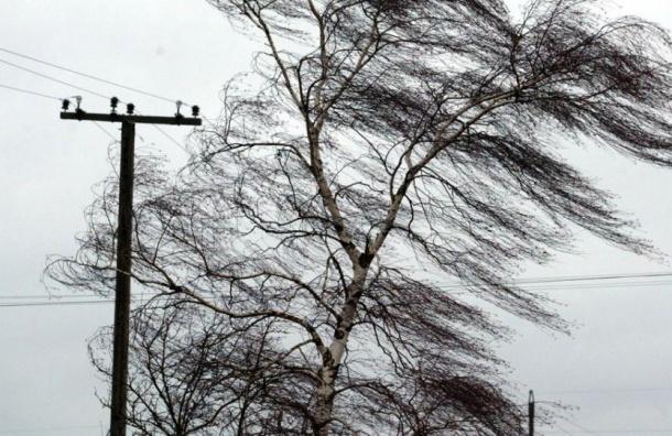 Петербуржцев ждут навыходных дождь исильный ветер