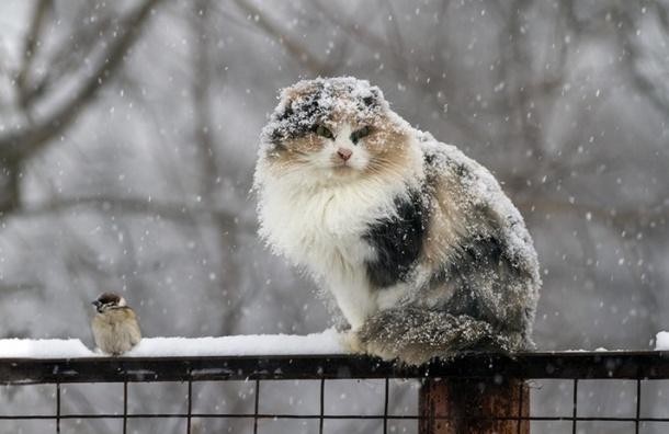 ВМордовии предполагается мокрый снег