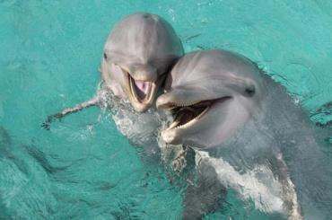 Декларацию оправах исвободах дельфинов подписали вПетербурге